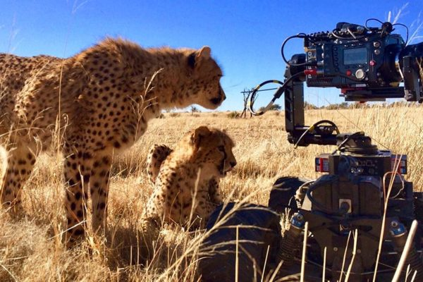 Newton-stabilized-remote-head-on-Motion-Impossible-BBC-Big-Cats-top